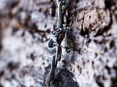 Pendente serpente con rosa in argento di Feel No Pain gioielli in vista laterale 3