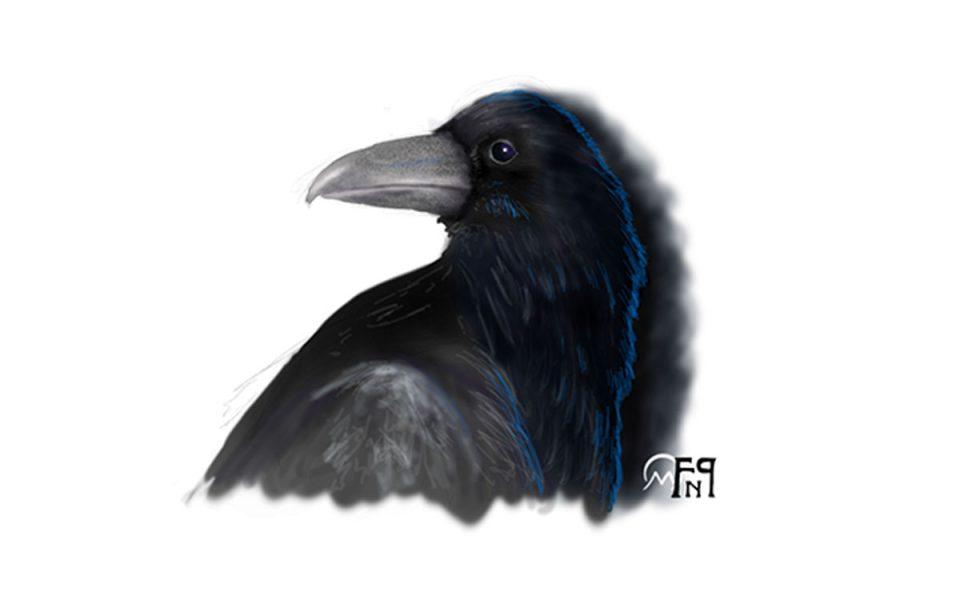 Disegno raffigurante una Testa di Corvo - Feel No Pain
