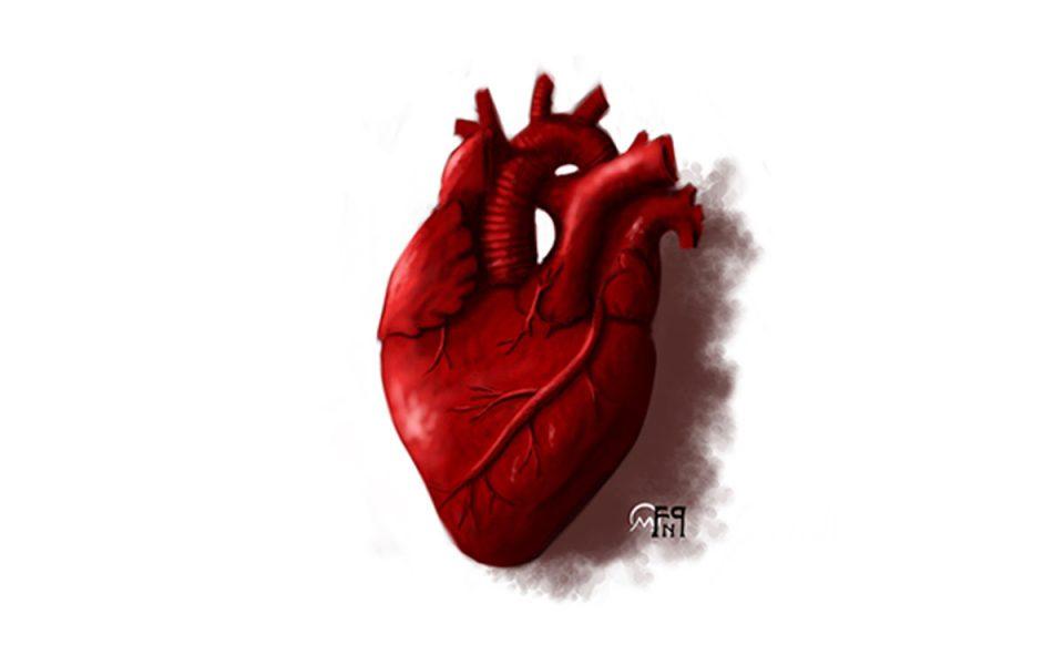 Disegno di un Cuore Anatomico umano