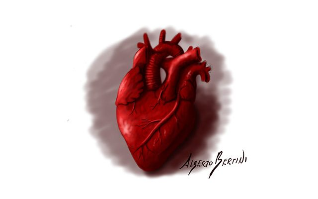 Disegno raffigurante un Cuore Anatomico di colore rosso - Feel No Pain