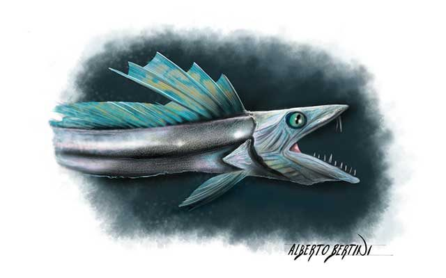 Disegno del Sauro Ferox, pesce abissale - Feel No Pain