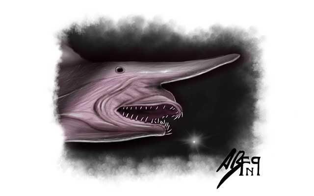 Disegno dello Squalo goblin, pesce abissale - Feel No Pain